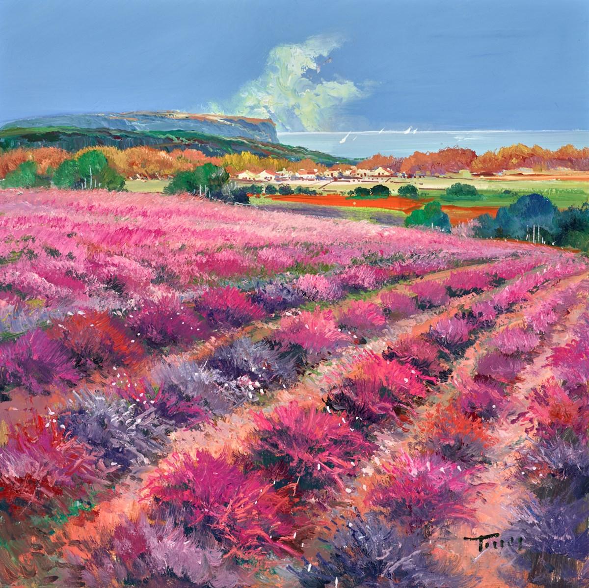 Pink Fields IV